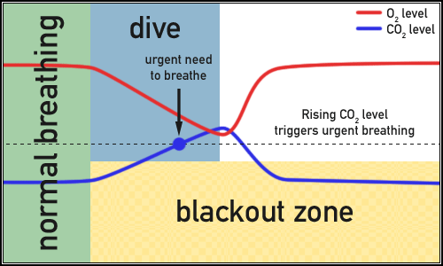 Shallow water blackout graph 1.png