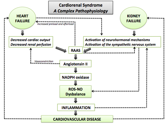 Cardiorenal syndrome on diagram showing kidneys