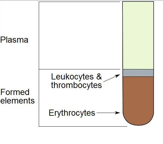 Illu blood components.jpg