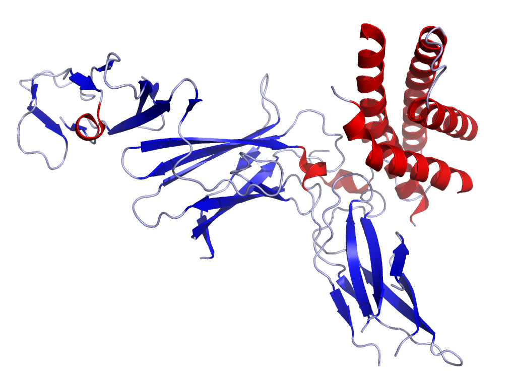 IL12 Crystal Structure.rsh.png
