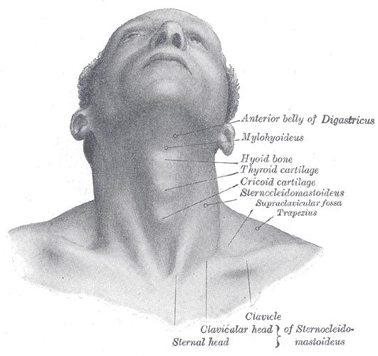 Diagram Of Lymph Nodes Of Neck Front - DIY Enthusiasts Wiring Diagrams •