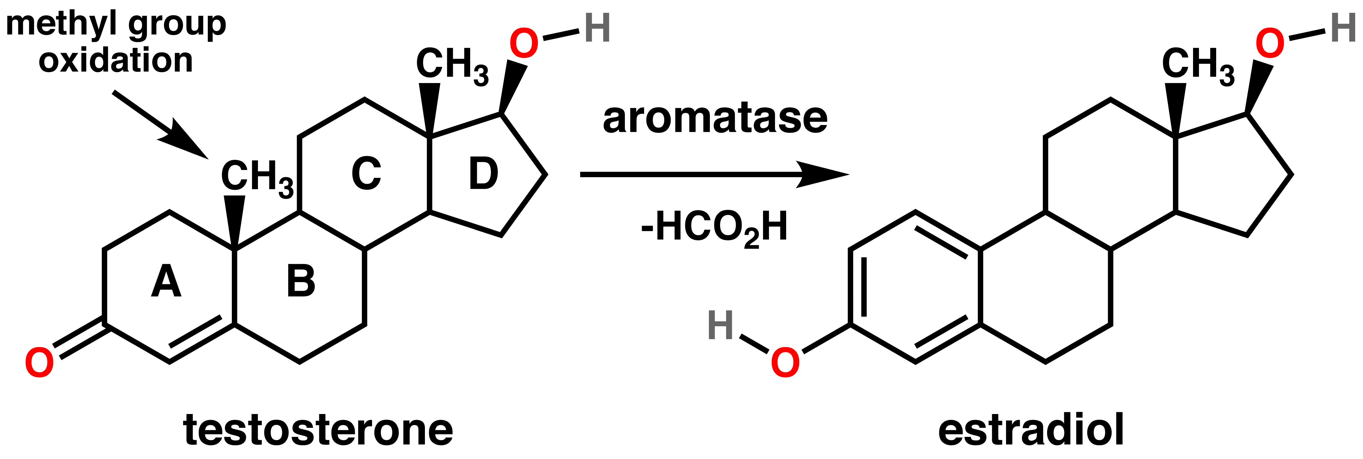 Testosterone estradiol conversion.png