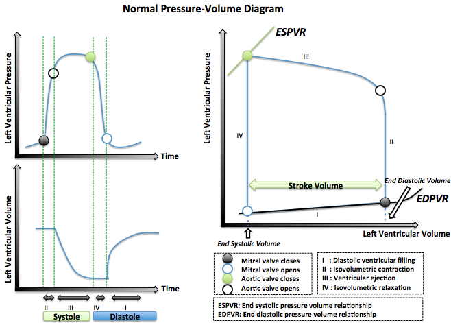 Normal pressure volume loop