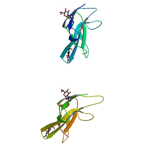 PBB Protein ACVR2A image.jpg