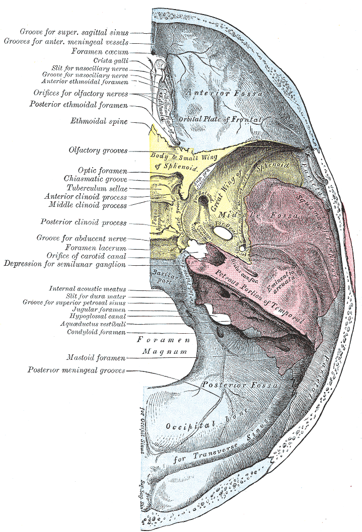 Frontoethmoidal Suture