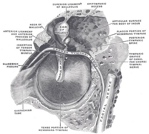 Patulous Eustachian Tube Natural Treatment
