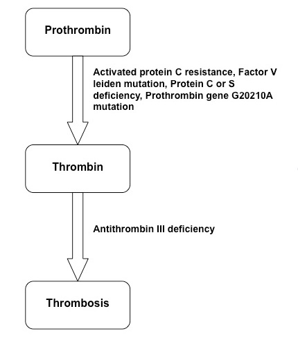 Figure thrombophilia mechanism.jpg