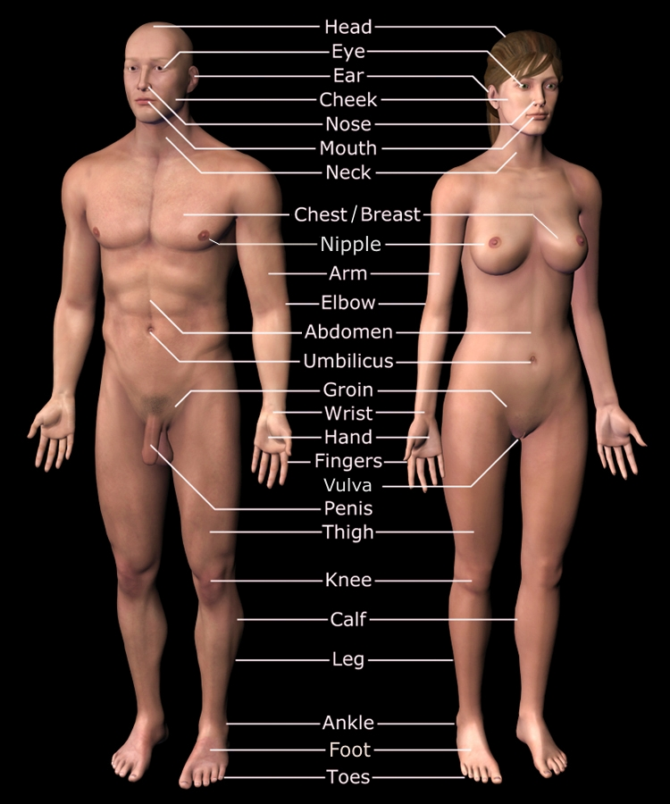 The complete guide on female sexual anatomy