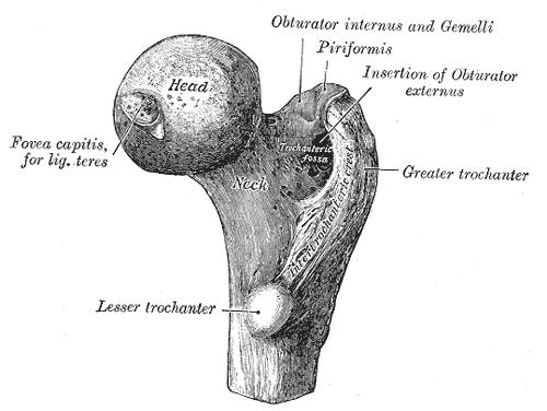 Lesser Trochanter