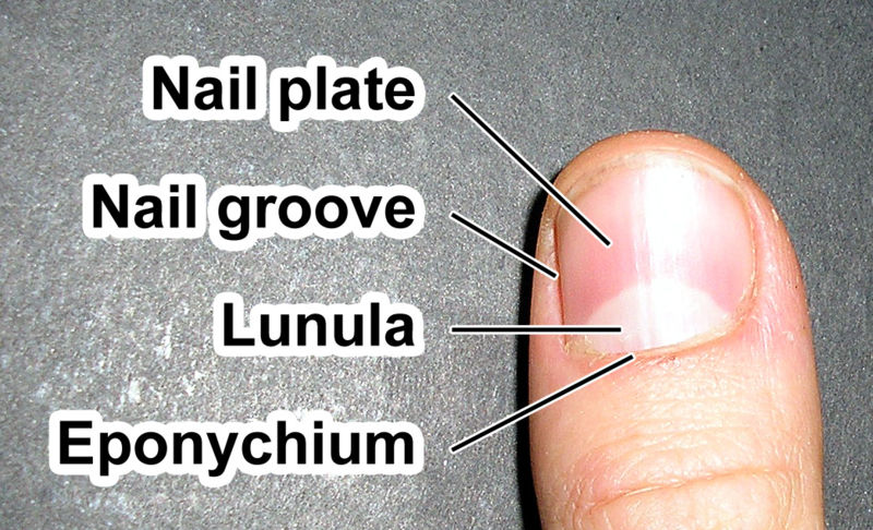 Fingernail label.jpg