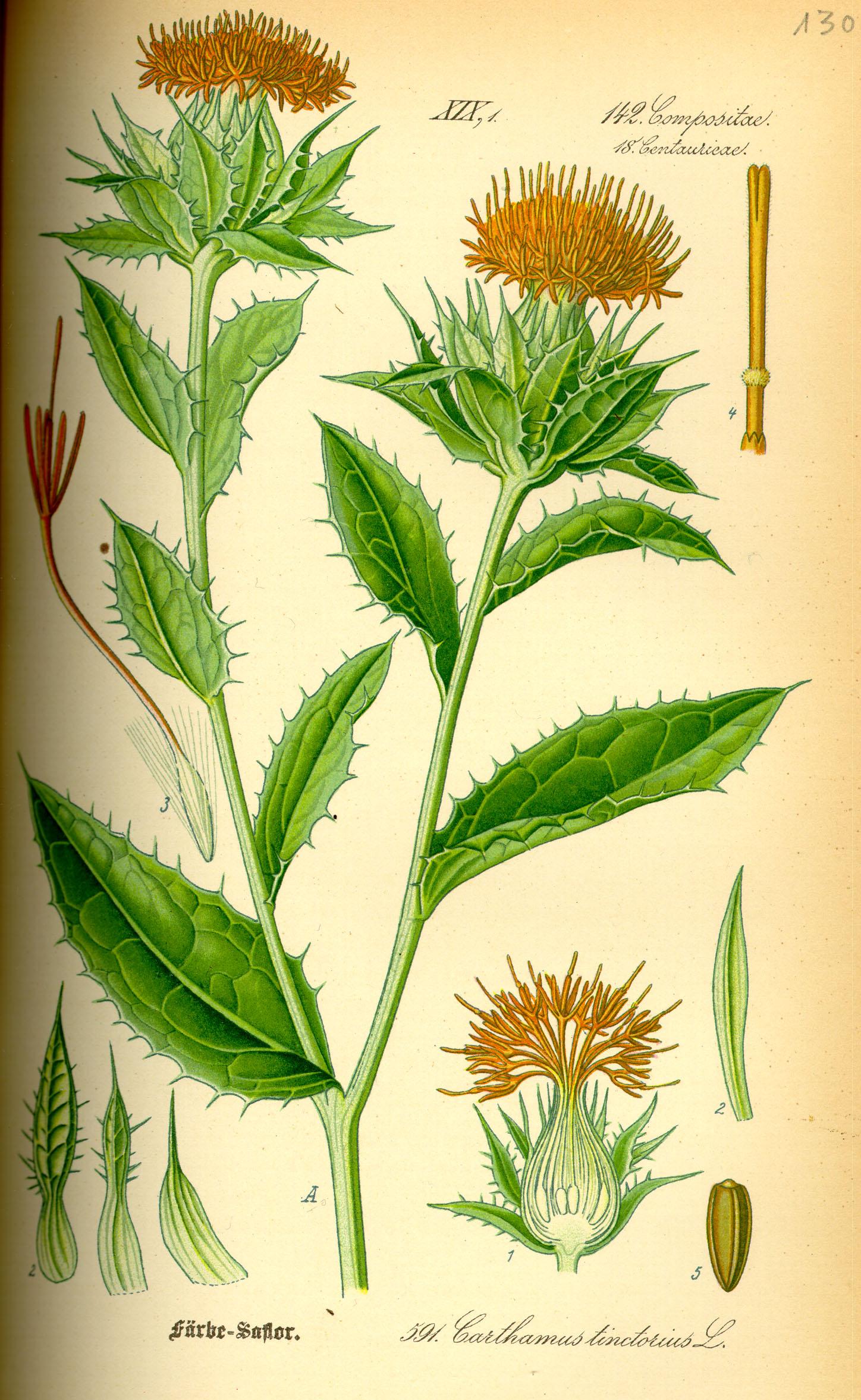Carthamus Tinctorius Safflower: Safflower