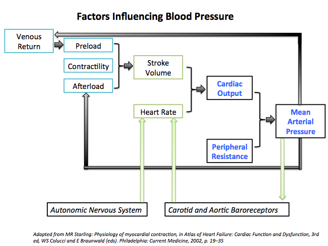 Factors influencing blood pressure