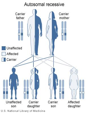 ichthyosis lamellaris has an autosomal recessive pattern of inheritance