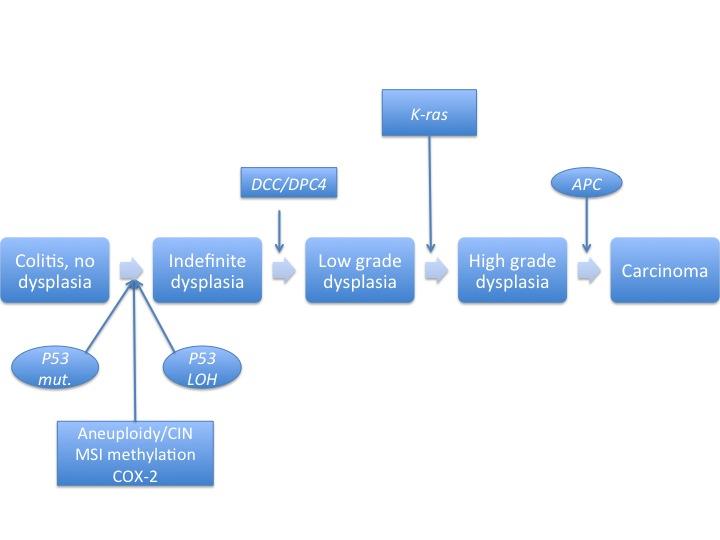 download O (β Hydroxyethyl) rutoside—experimentelle und
