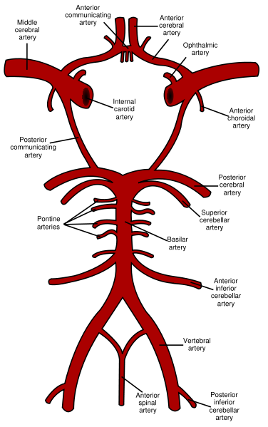 Circle of Willis en svg.png