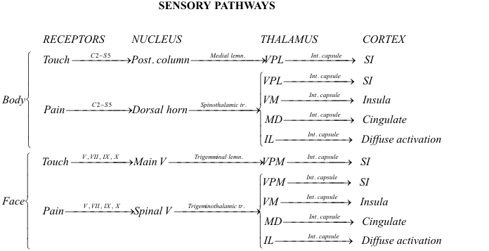 upper and lower motor neurons essay Als degrades motor neurons in three locations: the lower motor neuron cells of (hypoglossal in particular), and the upper motor neurons of the cerebral cortex amyotrophic lateral sclerosis: pathophysiology and implications for physical therapy this work will provide a basic overview.