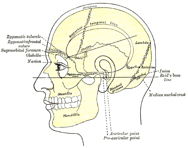 Mastoid Process Wikidoc