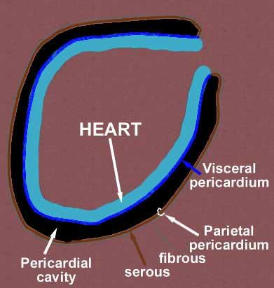 Diseases of the PericardiumVisceral Pericardium