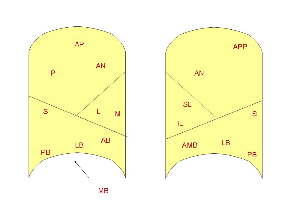 Bronchopulmonary Segment Wikidoc
