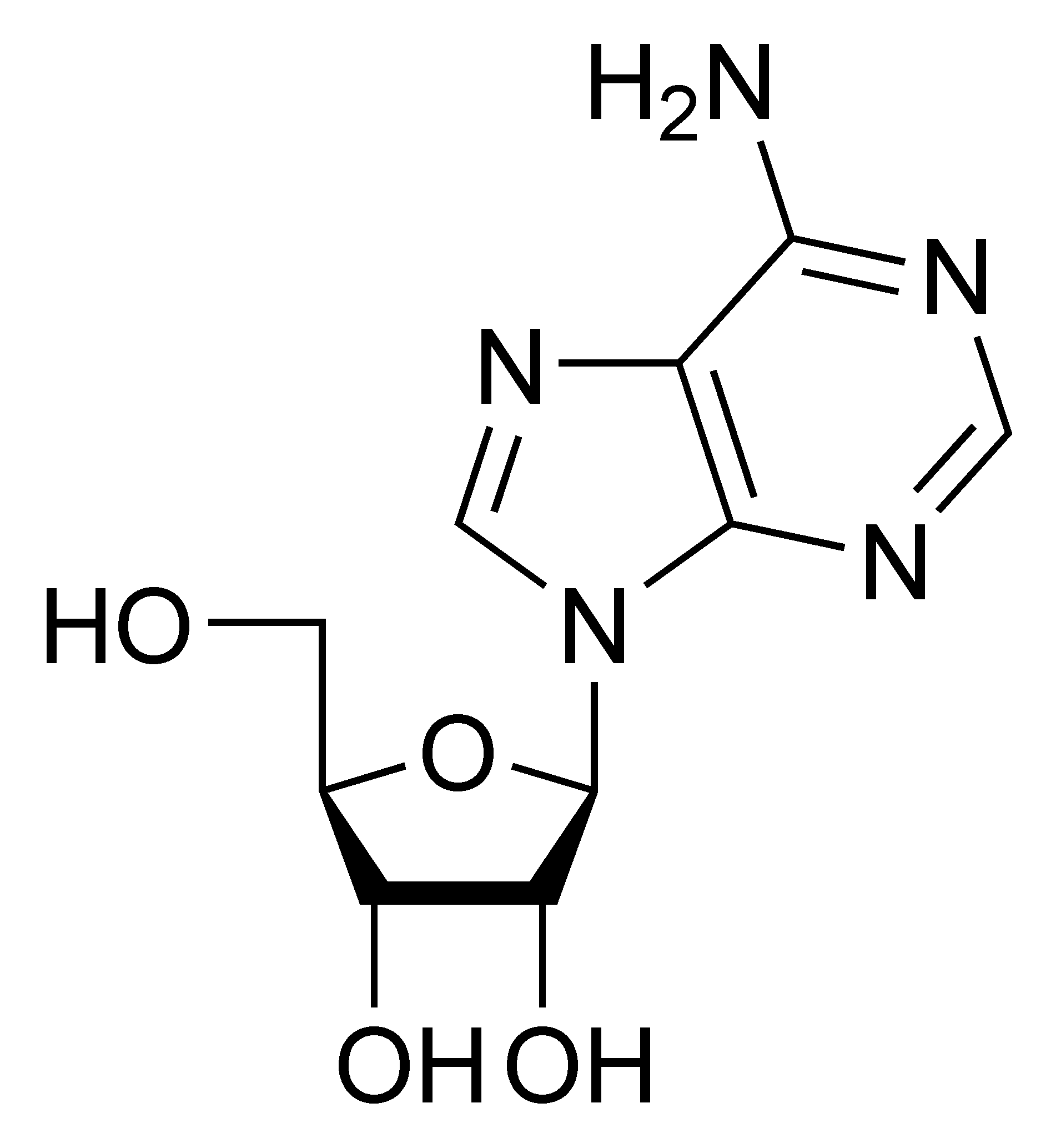 Chemical structure of adenosine