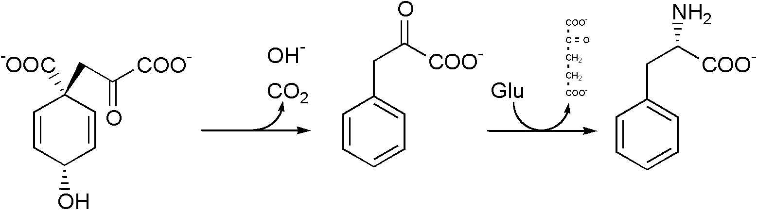 Phenylalanine biosynthesis.png
