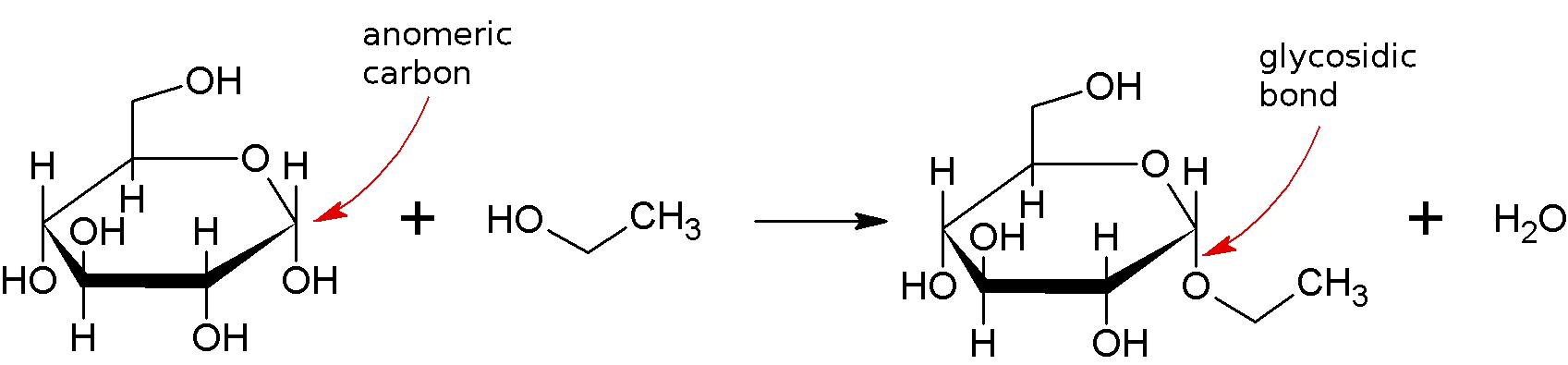 Glycosidic bond - wikidoc