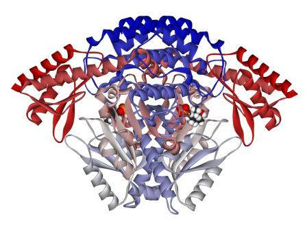 DOPA decarboxylase dimer 1JS3.png