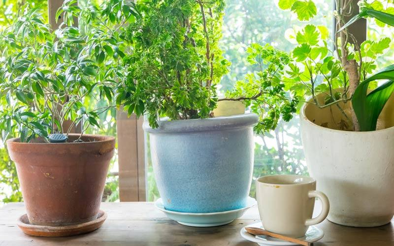 The Health Benefits of House Plants