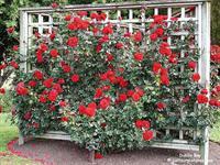 Rose Terrace Cottages