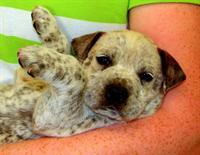 LAGO Vista Animal Clinic