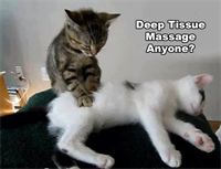 Kat Palazzolo, Massage therapist