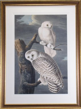Lot Wildlife Art Auction, Online-Only