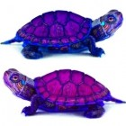 purpleturtles, United States of America