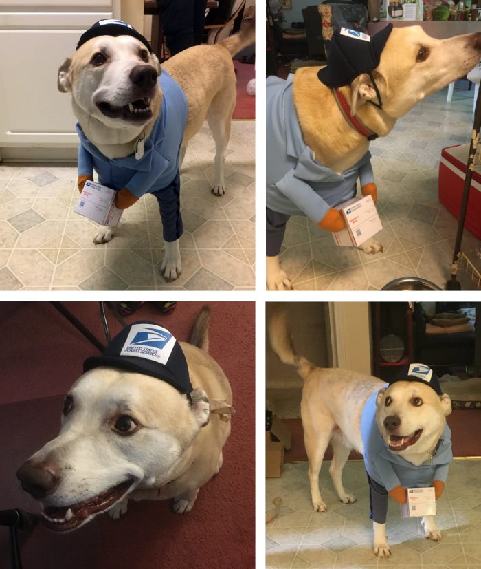 Dog Smokey is dressed up as a mail carrier, with a tiny package in his fake hands