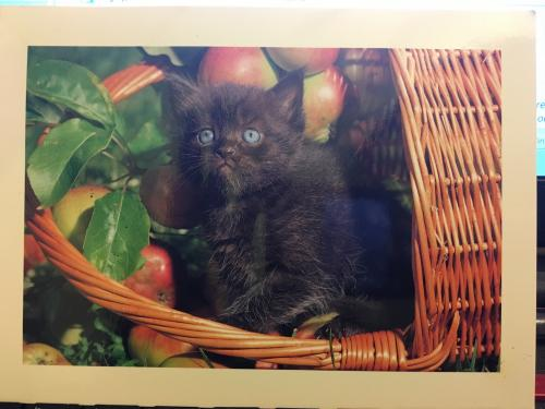 PostCrossing Received from USA - Esther Neela Blog