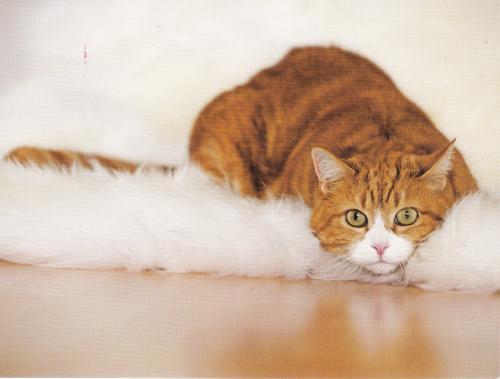 Official cat