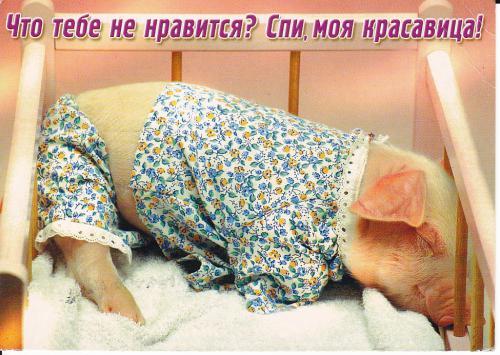 нравиться не нравиться спи моя красавица объявления, фото