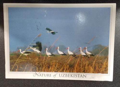 postcard image of UZ-8194