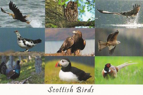 PostCrossing Received from UK - Esther Neela Blog