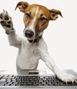 Creating a Pet-Friendly Home Office