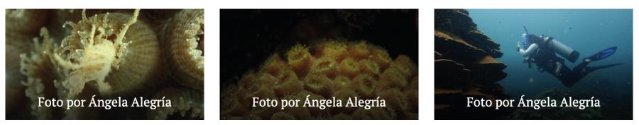 corales de varadero universidad de la costa 2