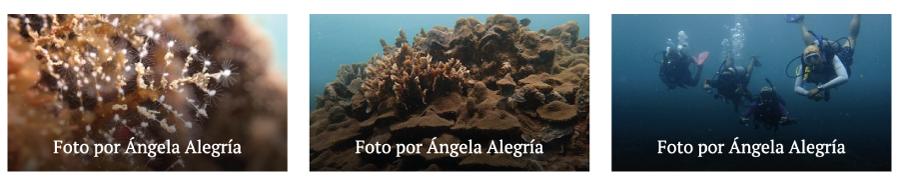 corales de varadero universidad de la costa 3