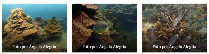 corales de varadero universidad de la costa 4