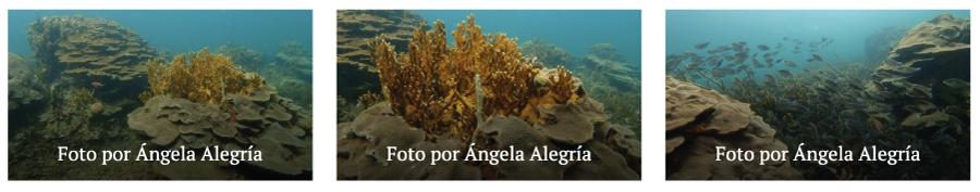 corales de varadero universidad de la costa 5