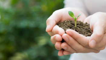 Environmental Management