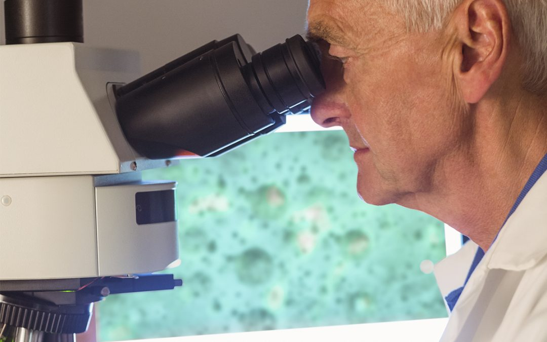 Stem Cell Transplant News: Cancer Research