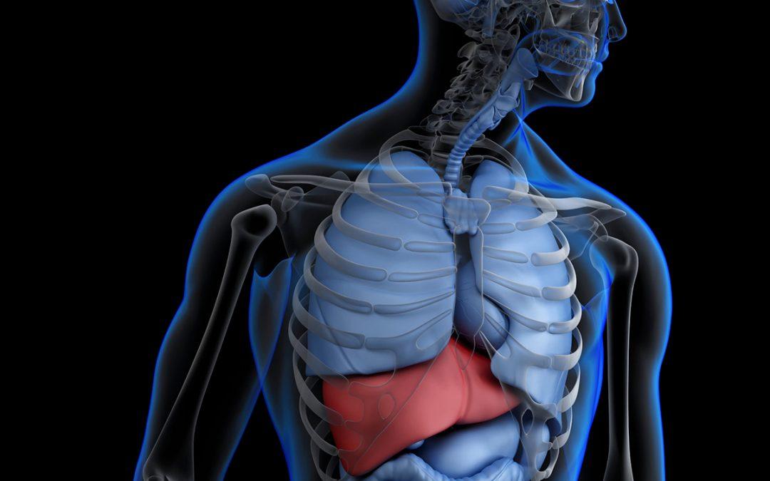 Stem Cells Help With Liver Regeneration