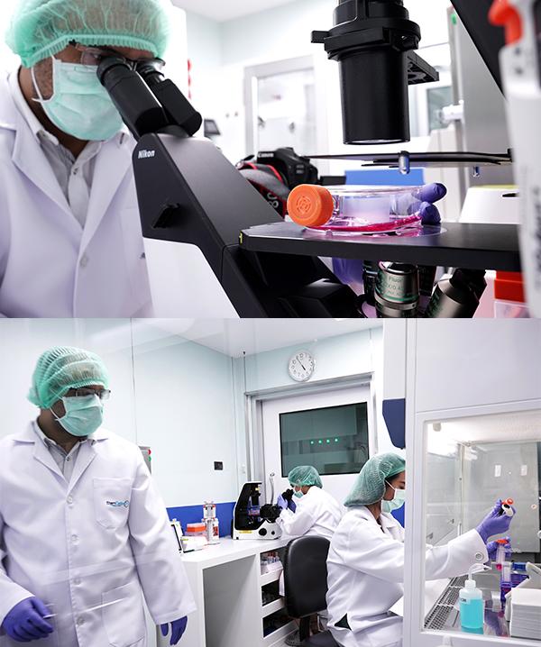 Stem Cell Pool Re-population