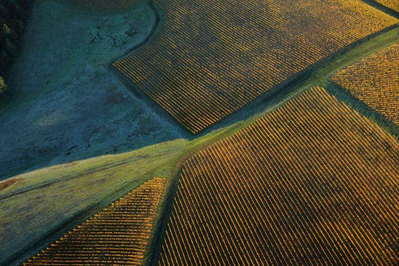 The Steward Farm Trust