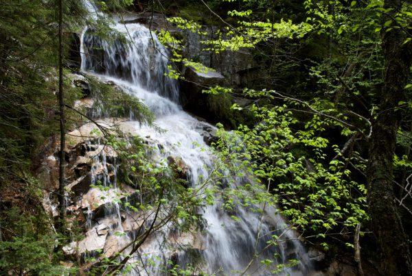 20190610-37.5-NH Franconia Notch Falling Waters Trail